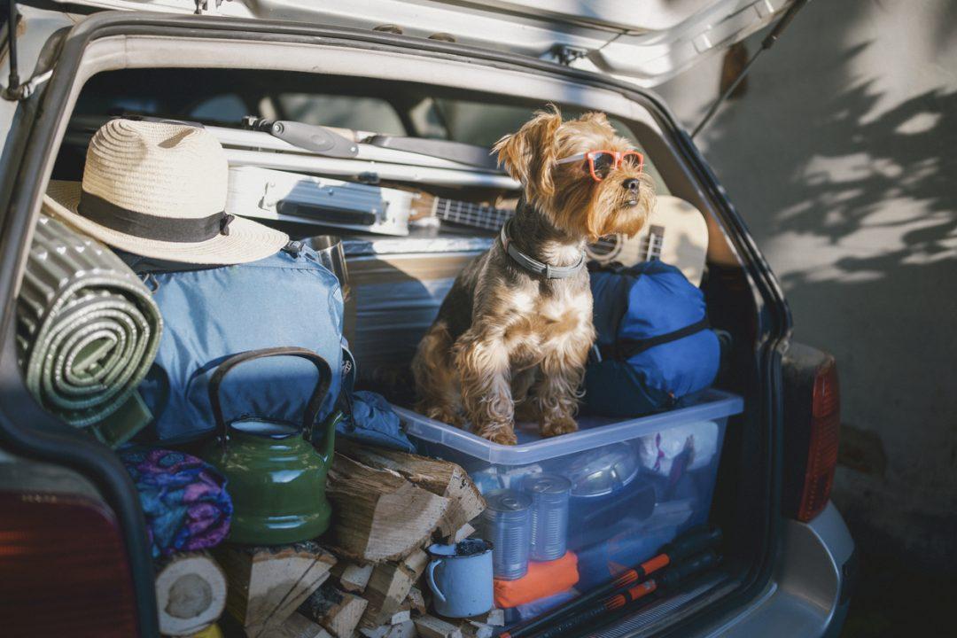 In vacanza con gli animali in tutta sicurezza in Italia o all'estero: come preparare il viaggio