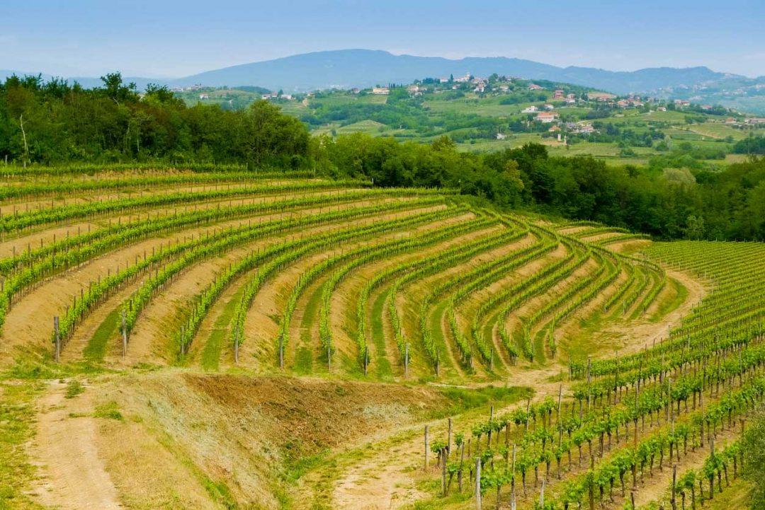 Colli orientali del Friuli e il Collio Goriziano