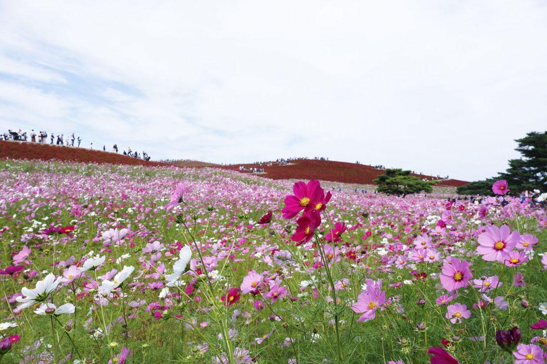 Ibaraki, tra campi di fiori, l'agenzia spaziale giapponese, statue e un antico santuario