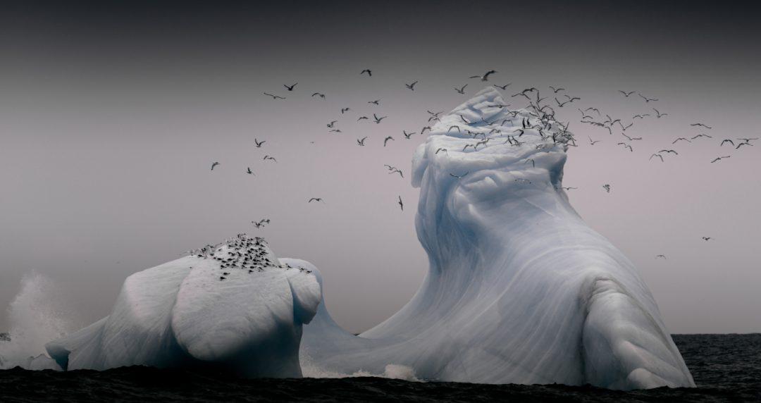 """""""Tutta la bellezza del mondo"""": gli scatti del Cewe Photo Award 2021"""