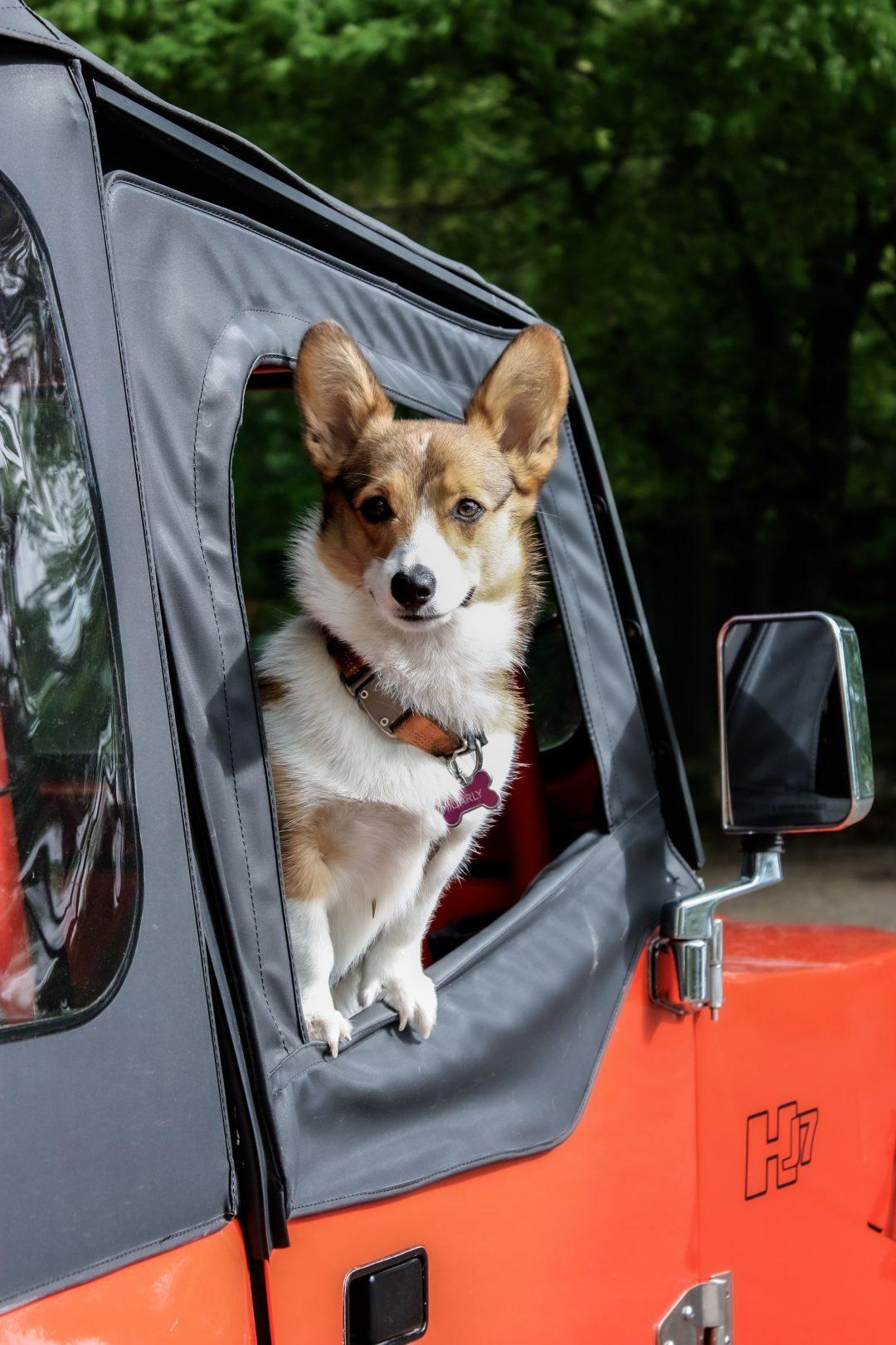In auto con gli animali