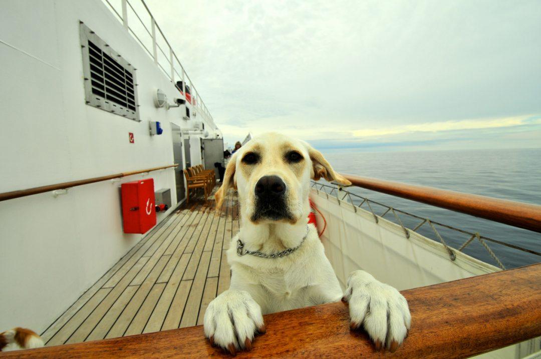 In nave con gli animali