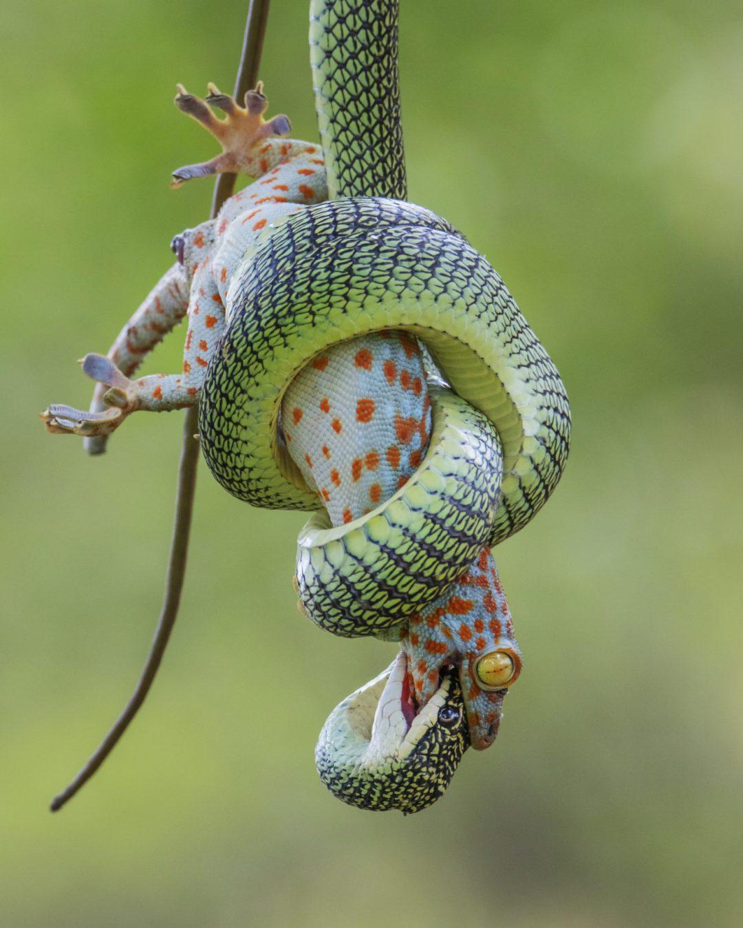 Il fascino della natura selvaggia: le foto più belle del Wildlife Photographer of the Year 2021