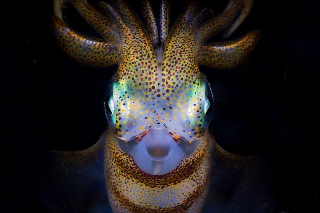 La fragile vita in fondo al mare: i vincitori degli Ocean Photography Awards