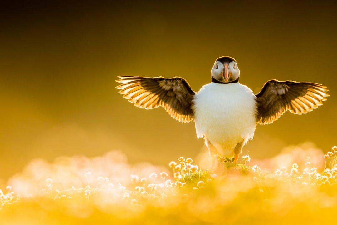 """L'uccello bloccato dal muro di Trump e le altre foto vincitrici del """"Bird Photographer of the Year"""""""