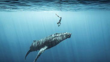 ocean photography awardss