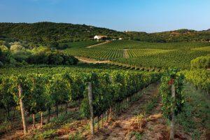 Esperienze in cantina: otto idee per un weekend insolito tra le vigne