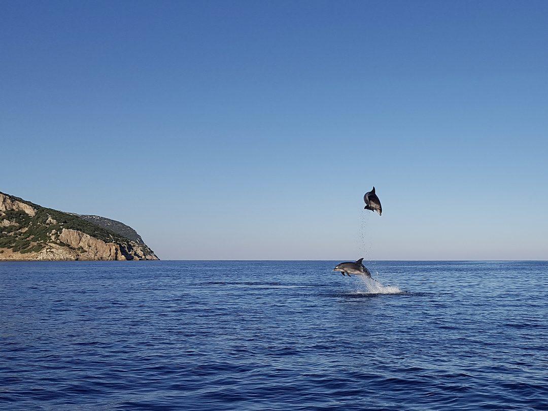 Ammirare i delfini residenti