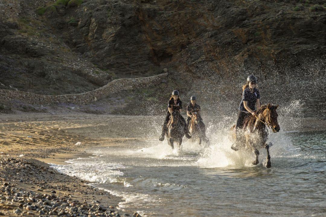 Terra: Cavallo