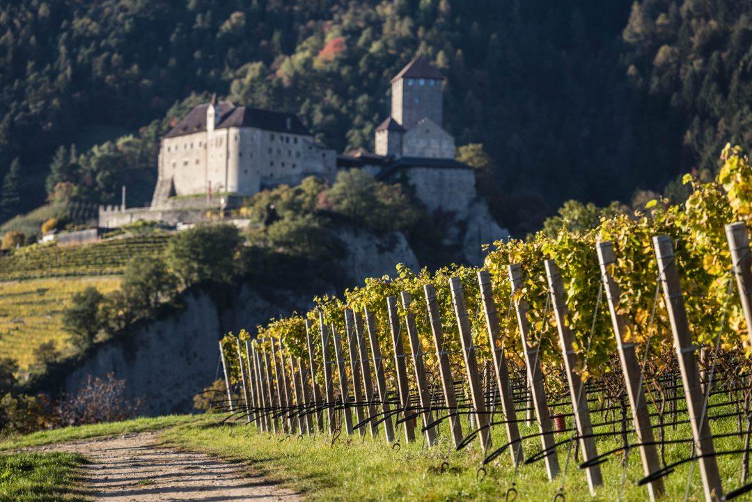 sentiero del vino a Tirolo sopra Merano