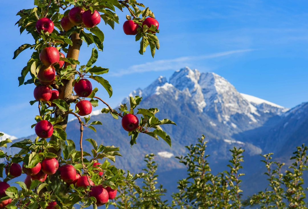 Il distretto delle mele Marlene
