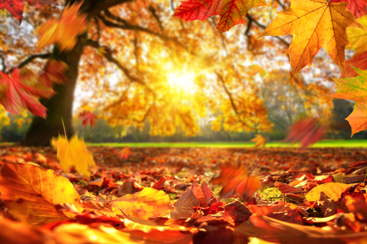 Perché la data dell'equinozio d'autunno può cambiare da un anno all'altro?