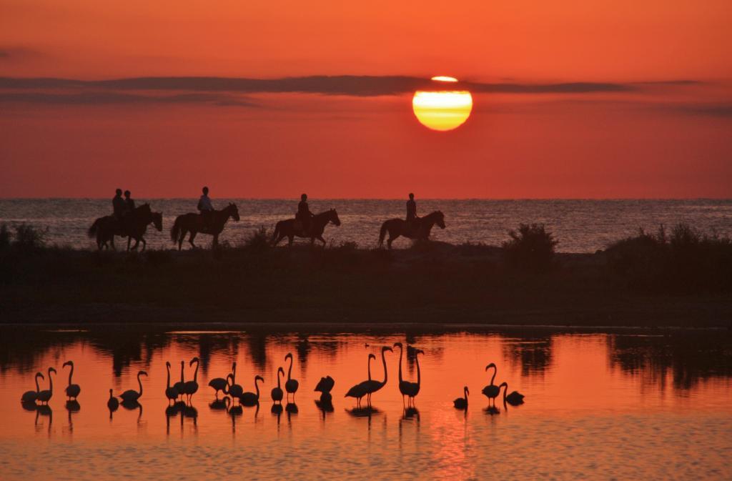A cavallo tra pinete e mare